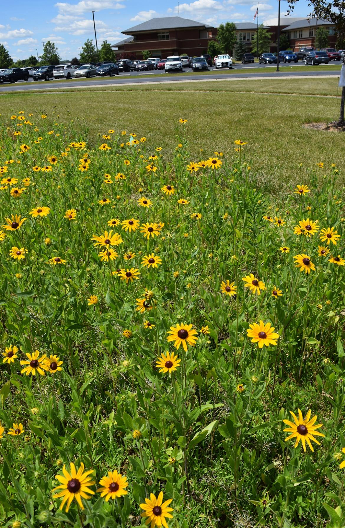 Centennial Prairie Wildflower Garden The Bellevue Hospital